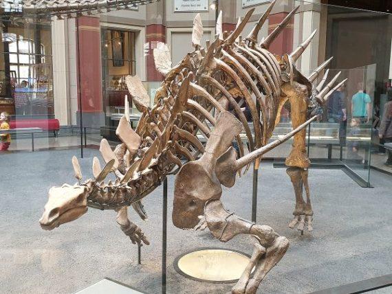 Natural History Museum = Museum für Naturkunde